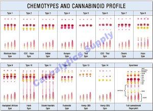 ChemotypesPic2-900x654